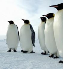 Алгоритм Google Penguin